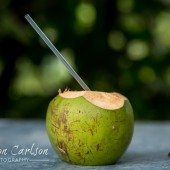 Sipping a Cold Coconut in the Jungle